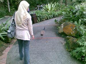 Singapore zoo image 2