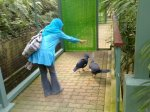 Jurong Bird Park image 2