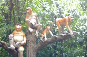 Singapore zoo image 1